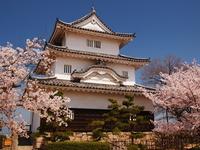 Sakura bloom Marugame Castle Stock photo [2313965] Marugame