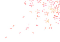 Cherry Blossom [2315735] Cherry