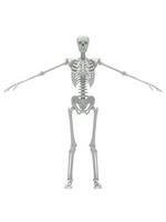 Skeleton White 1 [2318719] Skeleton