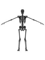Skeleton Black 1 [2318723] Skull