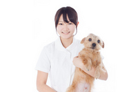 Veterinary Stock photo [2319972] Female
