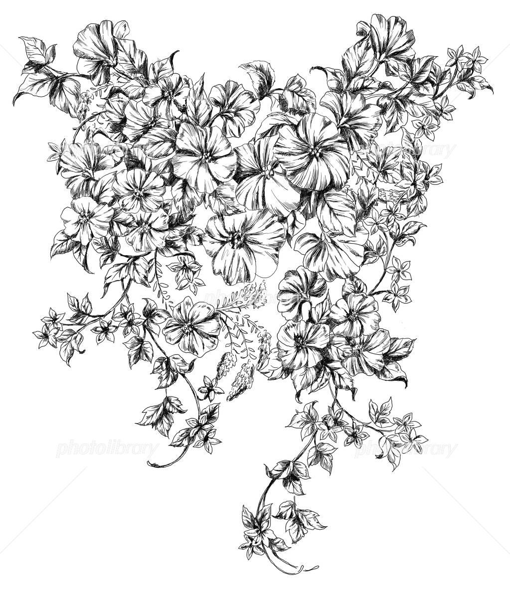 ペン画の花 イラスト素材 2448221 フォトライブラリー Photolibrary