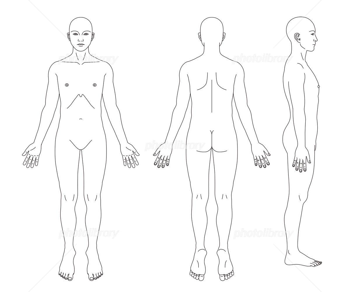 Human body diagram (no sex) イラスト素材