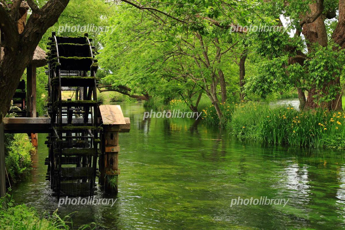 新緑の万水川 写真素材 [ 257800...