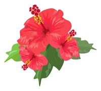 Hibiscus [2560221] Hibiscus