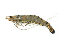 Shrimp Stock photo [2563302] Shrimp