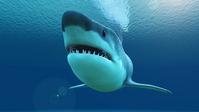 Shark [2563817] Spanish