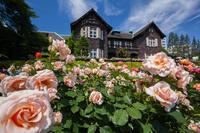 Of the old Furukawa garden rose garden and mansion Stock photo [2567863] Kyu-Furukawa