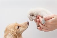 Kitten dog Stock photo [2573728] CAT
