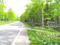 Birch Road Stock photo [2574090] White
