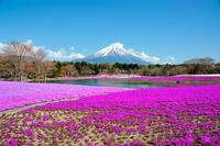 Fuji phlox Stock photo [2574760] Mt.