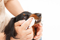 Toothpaste dachshund Stock photo [2577556] Dogs