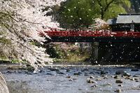 Alpine spring of Nakahashi Stock photo [2578209] Gifu