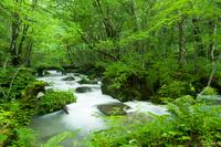 Summer of Oirase Stream Stock photo [2675497] Oirase