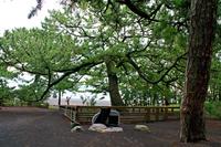 Shizuoka Prefecture plumage of pine Stock photo [2752036] Miho