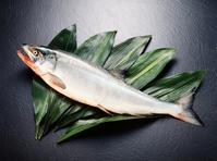 Salmon Stock photo [2758993] Salmon