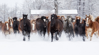 Populations of horses Stock photo [2759808] Horse