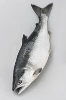 Tokisake Stock photo [2840127] Salmon