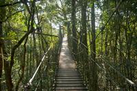 "Gondwana rainforests in the Lamington National Park ""Tree Top Walk"" Stock photo [2842421] Australia"