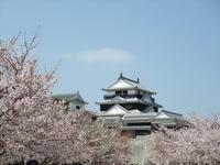 Matsuyama Castle and cherry Stock photo [2843694] Matsuyama