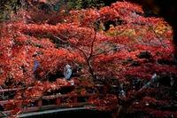 Miyajima Momijidani park Stock photo [2843994] Maples