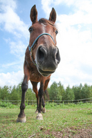 Oncoming horse Stock photo [2921432] Flower