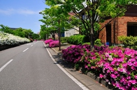 Azalea bloom residential area Stock photo [2921427] Residential