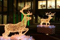 Christmas display (reindeer) Stock photo [2924502] Christmas