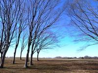 Dead tree of winter of grassland Stock photo [2924902] Dead