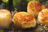 Butter grilled scallops Stock photo [2925564] Butter