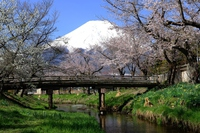 Mount Fuji with cherry blossom Stock photo [2930280] Landscape