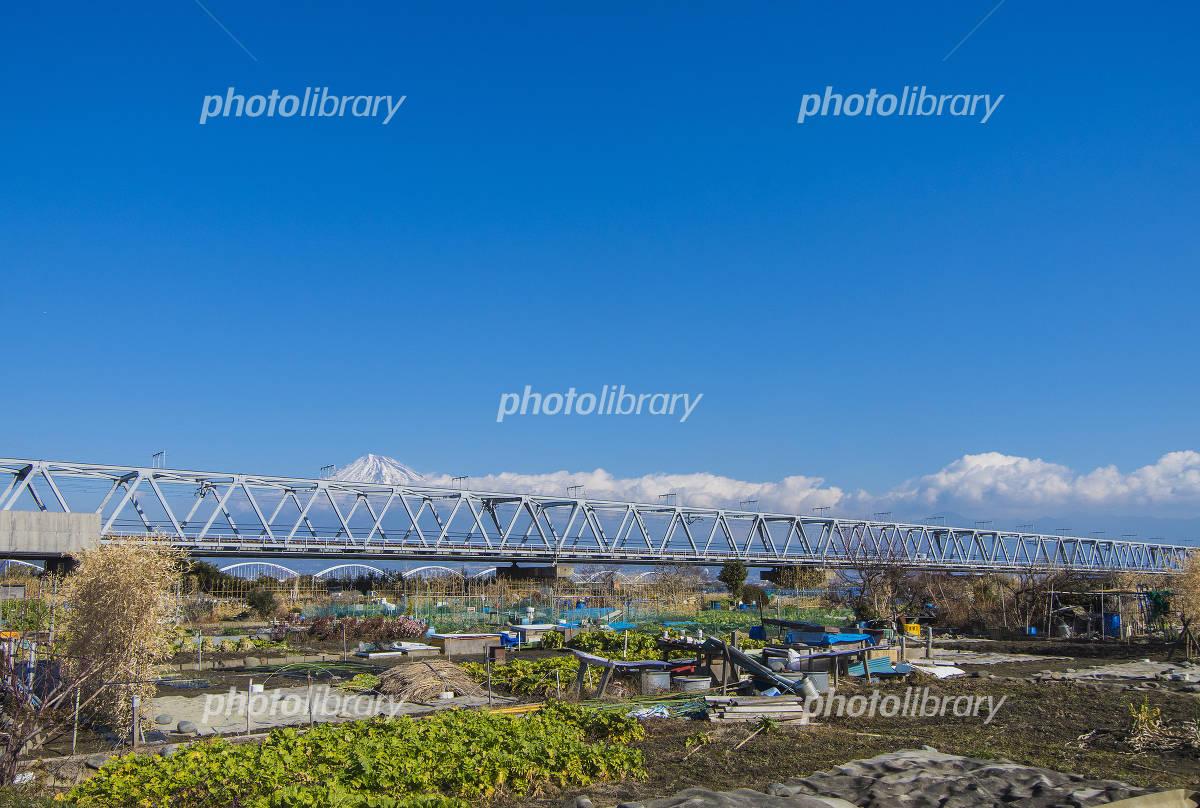 静岡県、富士川河川敷の畑 写真素材  静岡県、富士川河川敷の畑 ID 3016529   写真素