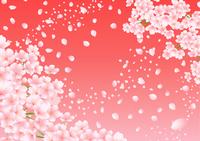 Cherry [3006433] Cherry