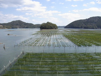 Enteromorpha farming Gokashowan Stock photo [3008323] Gokashowan