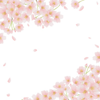 Cherry frame [3009046] Cherry