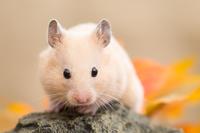 Kinkuma hamster of rock Stock photo [3012840] Kinkuma