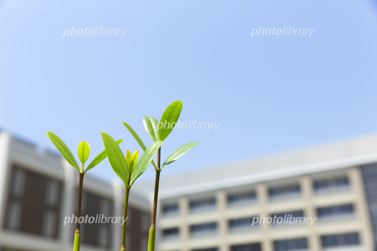 Growth image of school and shoots Photo