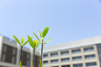 Growth image of school and shoots Stock photo [3092229] Germination