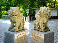 Shiiba Itsukushima shrine guardian dogs pair Stock photo [3094151] Miyazaki