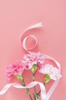 Mothers day carnations Stock photo [3094581] Mother's