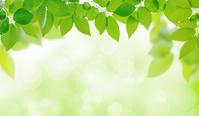 Environment image [3097021] Leaf