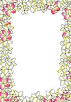 Frangipani frame color [3097929] Plumeria