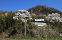 Hikone, Shiga Prefecture Sawayama Castle of spring Stock photo [3185958] Shiga