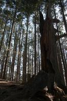 Dead tree of Mount Bukō Stock photo [3192648] Dead