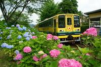 Isumi railway Stock photo [3194309] Hydrangea