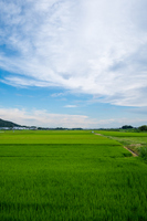 Tochigi countryside Stock photo [3303672] The