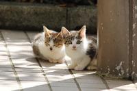 Kitten wild cat Stock photo [3392711] Feral