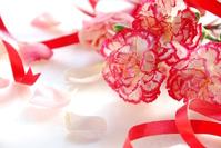 Carnation and ribbon Stock photo [3482618] Carnation
