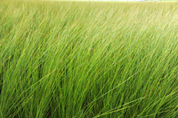 Natural grass field of pesticide-free Stock photo [3487769] Rush