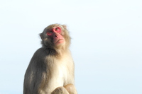 Monkey Stock photo [3592327] Monkey